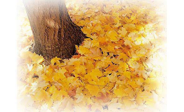 Вот и все опять за окном с тополей ветер листья срывает